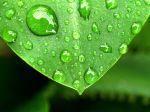 Mit künstlicher Intelligenz zu mehr Klima- und Umweltschutz