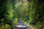 Wald und Holz zentrale Instrumente zum Schutz des Klimas weltweit
