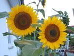 Außen heiß, innen kühl: Hitzeschutz im Sommer