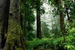 Holzverwendung ist Klimaschutz - Studie zu Waldflächen in der EU