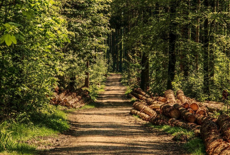 Klimaschutz und Biodiversität nur gemeinsam mit Wald und Holz ein Teil der Lösung