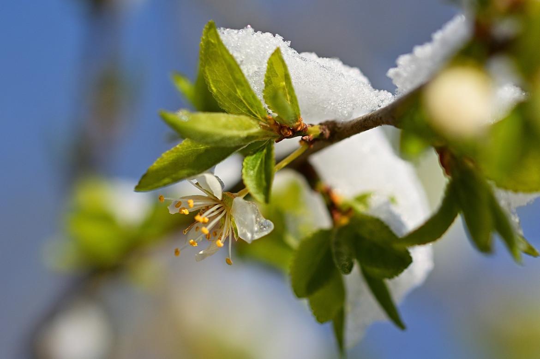 Schneefall und kühle Temperaturen: Heizölnachfrage steigt