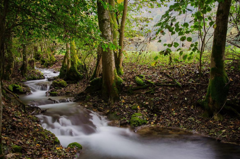 Klöckner: Der Waldzustand besorgt mich!