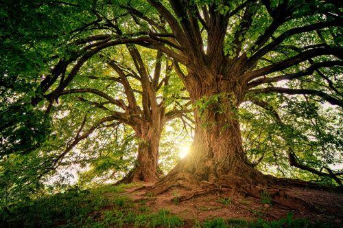 25. April: Tag des Baumes