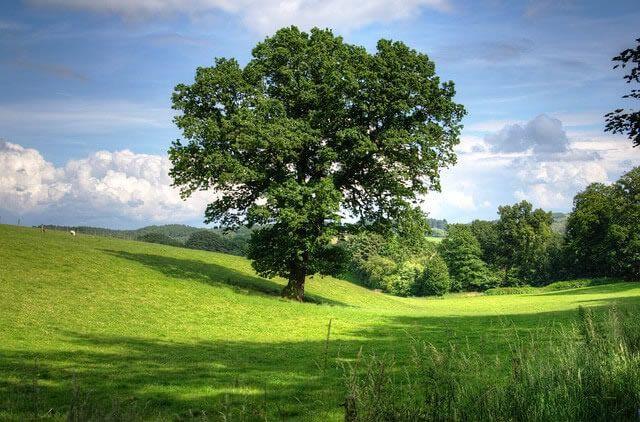 Start der neuen Förderrunde für investive kommunale Klimaschutz-Modellprojekte