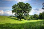 Wald und Holz vor großen Herausforderungen