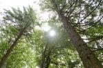 Klimaschutz wächst nach: Holznutzung als unterschätzer Faktor für das Weltklima
