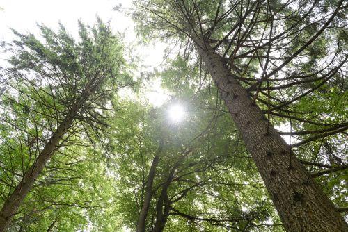 Förderung für Holzfeuerungen