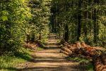 Klöckner: Wir brauchen eine Pflanzoffensive für unsere Wälder