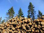 Keine Energiewende ohne Holzenergie