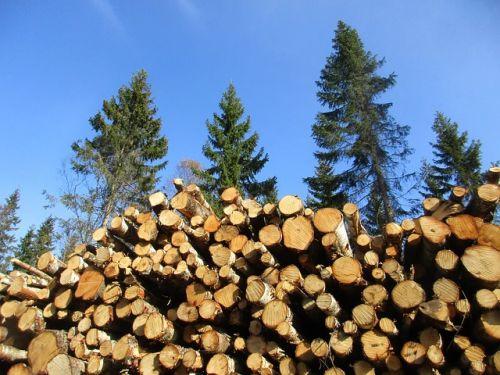 Große Koalition stärkt Potenziale von Holz für Wohnraum, Klimaschutz und ländliche Regionen
