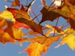 Gemütlich warm und trotzdem sparen: Tipps zum Heizkosten senken