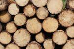 Corona-Krise: Rohstoffversorgung der Holzindustrie bleibt gesichert
