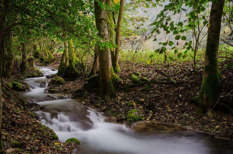 Internationaler Tag des Waldes 2020