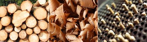 vom Holz zum Pellet