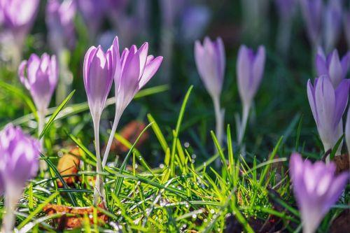 Messe-Tipp: Neue Ideen für Euren Garten....