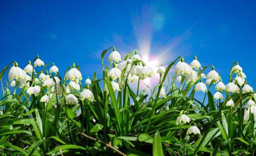 Schon jetzt ans Frühjahr und den nächsten Sommer denken!