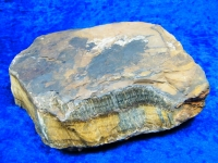 Tigerauge Rohstein XL 1,5kg