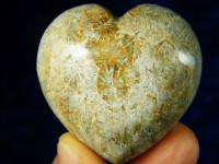 Koralle-Herz poliert