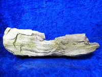 Versteinertes Holz XL-Stück