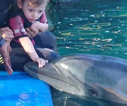 Stella und die Delphine